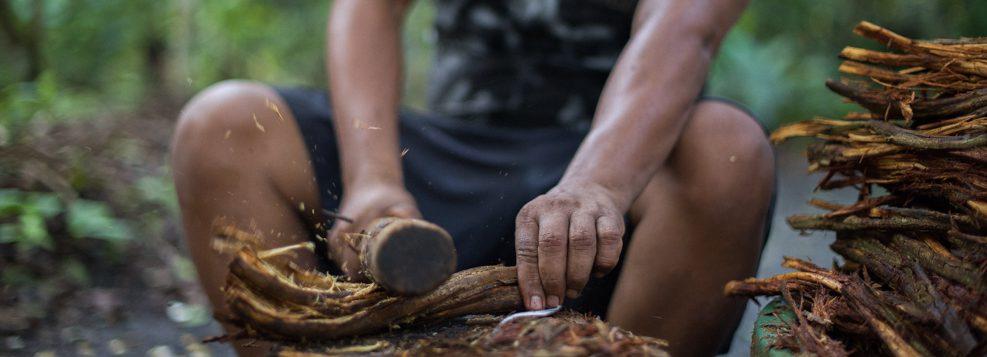 Ayahuasca preparation at Caya Shobo